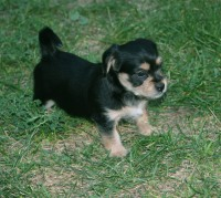 Tribble's baby picture, summer 2010