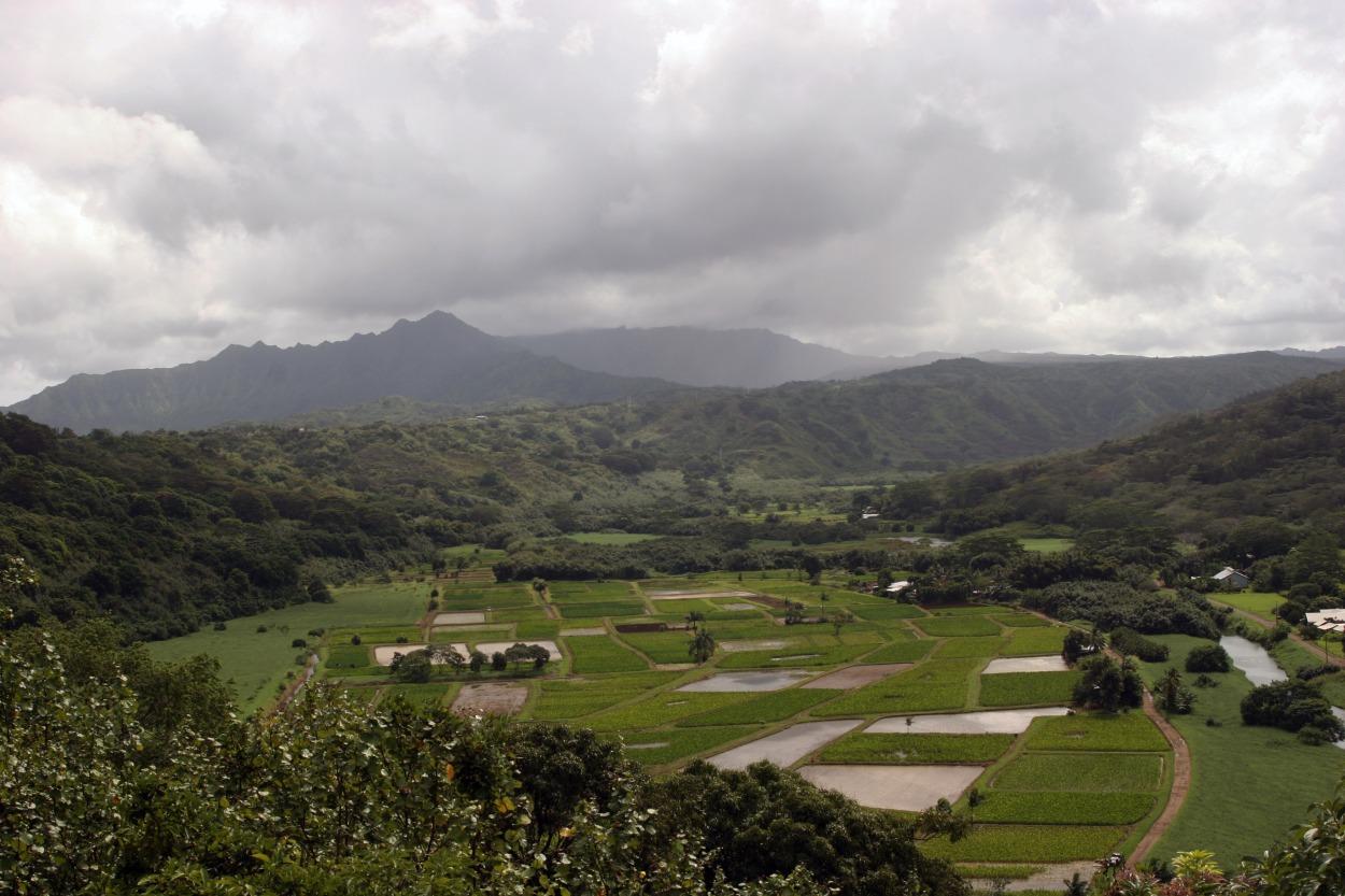 taro fields, Kauaii Hawaii