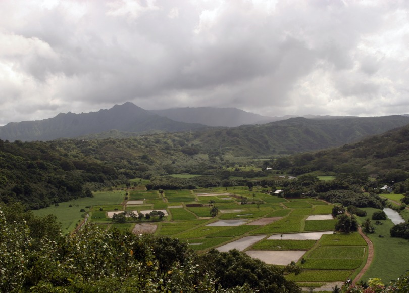 taro fields, Kauaii Hawaii