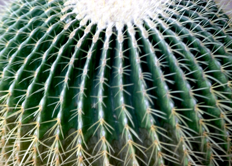 barrel cactus, thorns