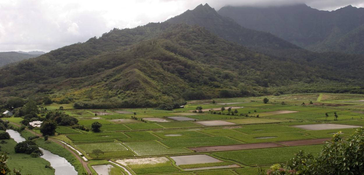 Hanalei, Kauai, Hawaii, taro fields