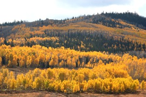 Fall foliage, near Steamboat Springs, Colorado