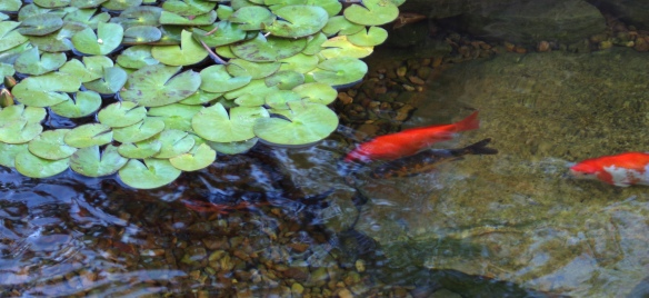 Two fish in a peaceful pond