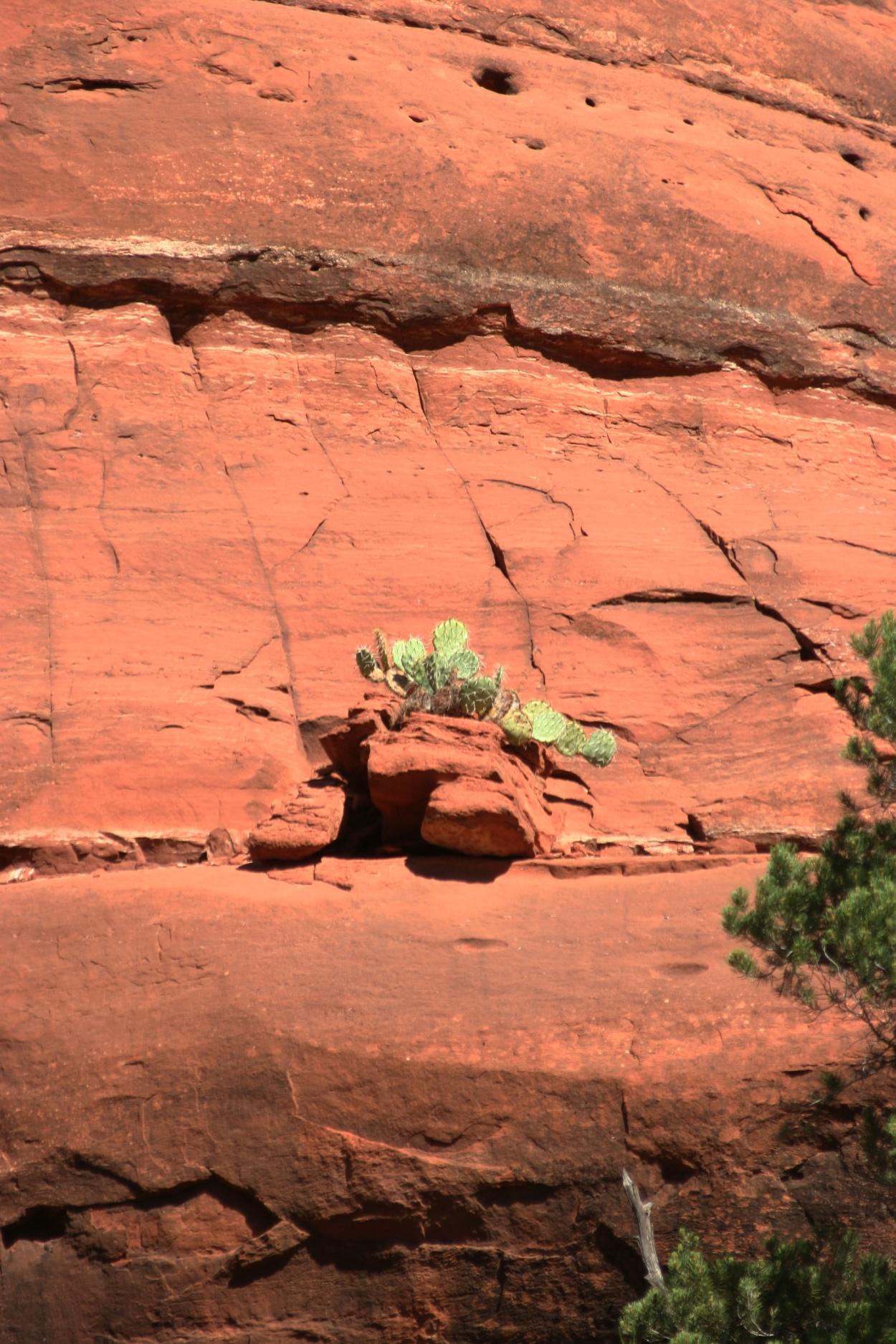 cactus, red rock cliff