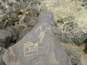macaw petroglyphs, New Mexico, rock carvings