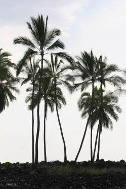 Place of Refuge, Hawaii Island