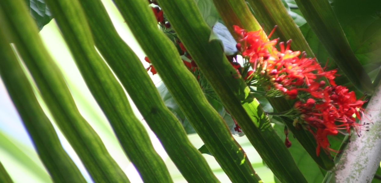 red blossoms, palm frond