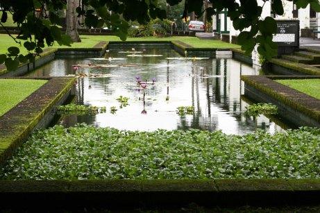 pond- waterlillies 2
