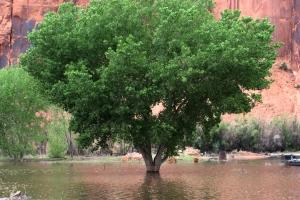 tree, flood waters