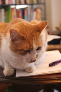 Russell Sprout, orange-and-white cat