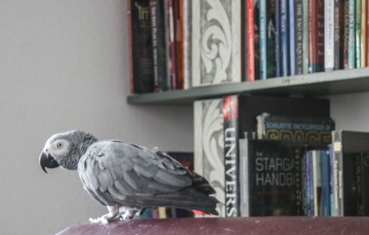 Do birds of feather flock together? Does Ruby like books too?