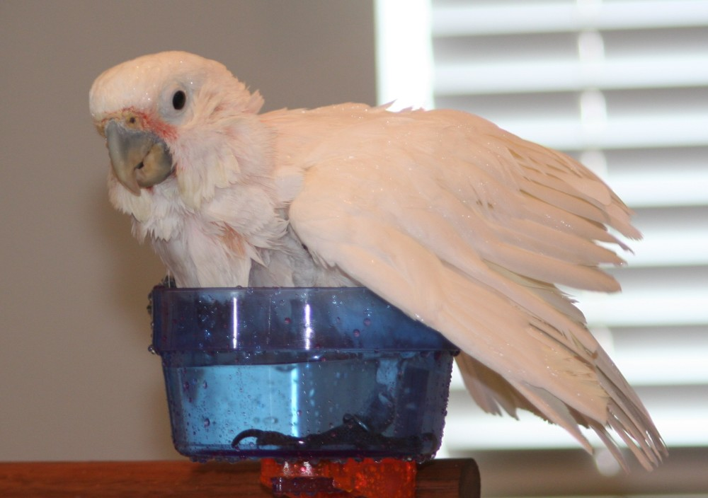 Lessons from my Cockatoo (4/4)