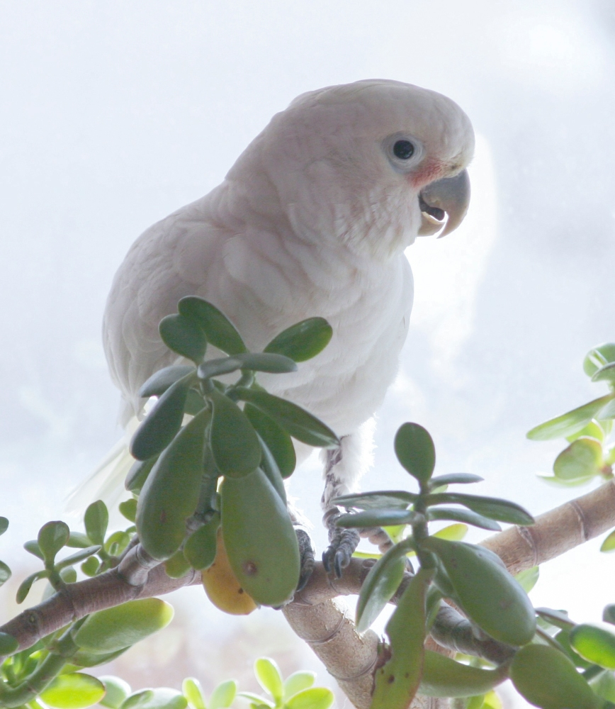 Lessons from my Cockatoo (1/4)