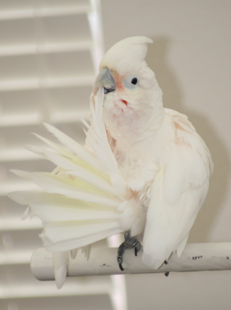 Lessons from my Cockatoo (2/4)