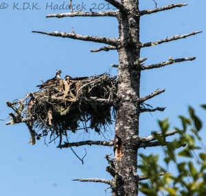 Nesting birds, near Gold Beach, Oregon