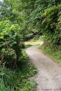 dirt path, vegetation