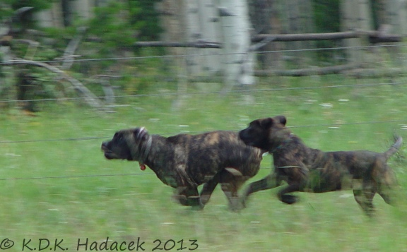 Sisters running in meadow CW