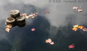 Japanese garden, leaves on water