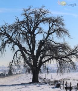 tree, snowy field