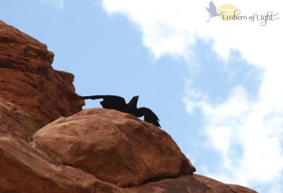 Moab raven 3a CW