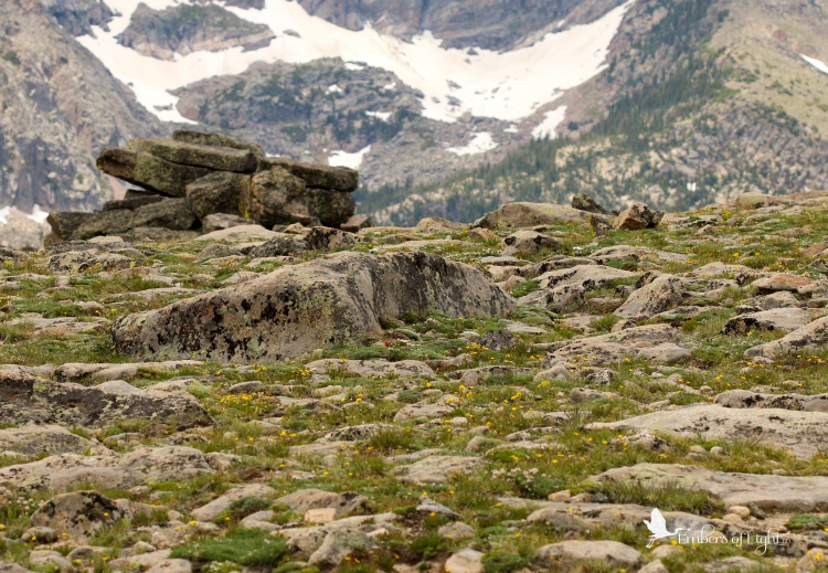 This field of rocks looks pretty plain, but it is filled with clumps of tiny alpine flowers between all the rocks.
