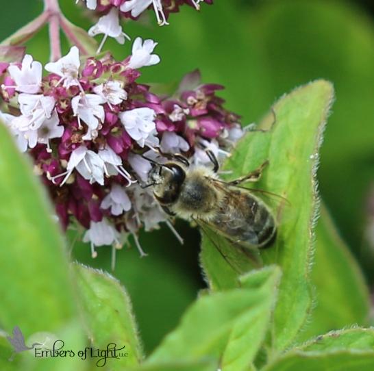 Bee 5 CW