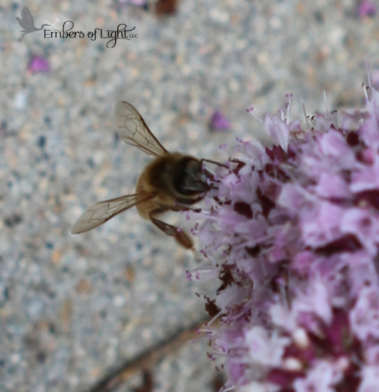 Bee 6 CW