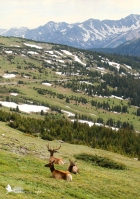 Rocky Mountain National Park, elk, mountains, snow
