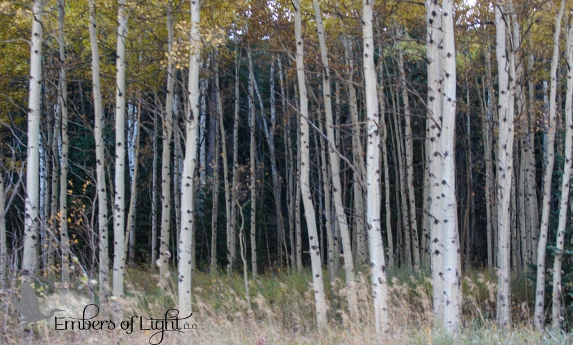 Aspen grove 1 CW