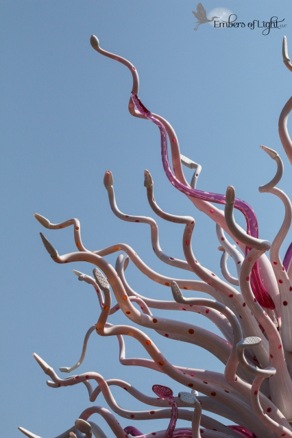 from the Chihuly exhibit at the Denver Botanic gardens