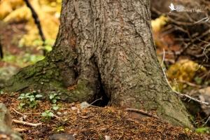 fairy niche in a tree