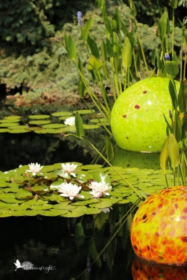 Chihuly glass sculpture, glass orbs, water lilies, Denver Botanical Garden