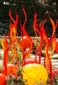 Chihuly glass sculpture, glass orbs, glass sculpture
