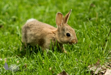 This bunny doesn't hibernate in spring or look for grass in the snowy winter. It knows which season is in the flow with its needs.