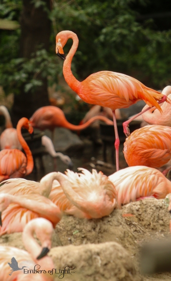 Ahhh, such an ability to balance. The flamingo stands in equilibrium on only one leg.