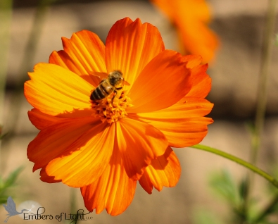 Orange flower w bee 1 CW