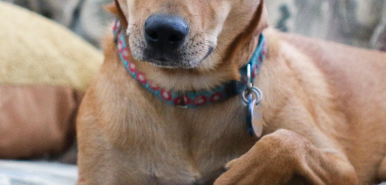 dog, worried, anxious