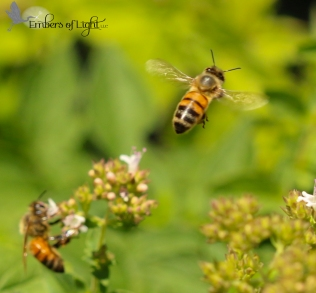 These bees have lots of work to do. They don't ask the queen what she needs; they just know.