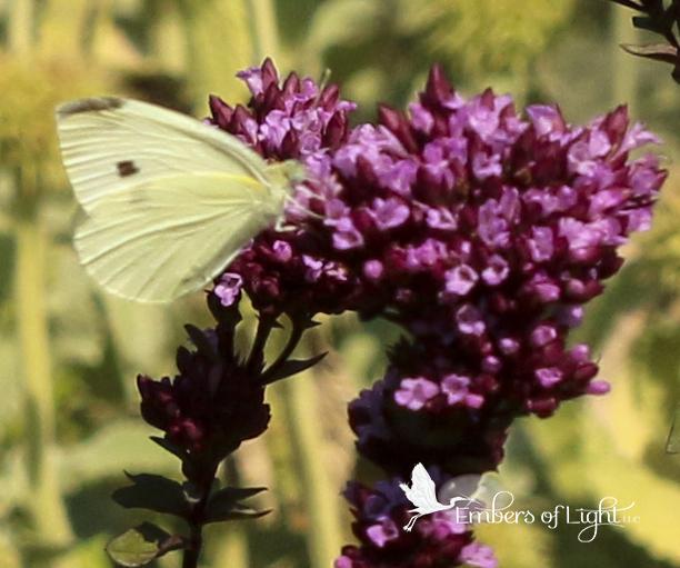 purple flowers, yellow butterfly, purpose