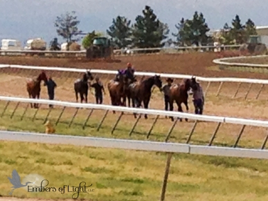 horses walking the track