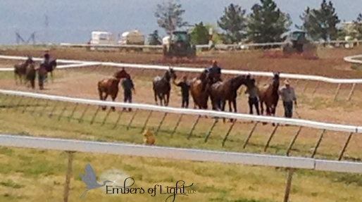horses walking track