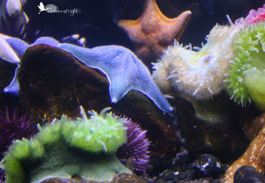 starfish, anemones