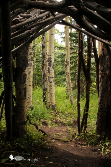 Looking out of the shelter at the nearby aspen trees,