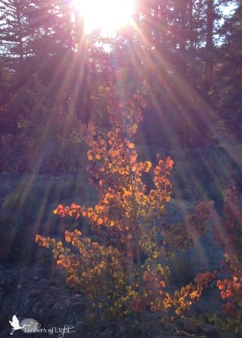 tree in sun's spotlight