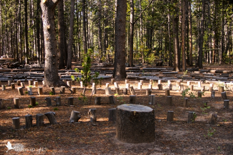 pine labyrinth