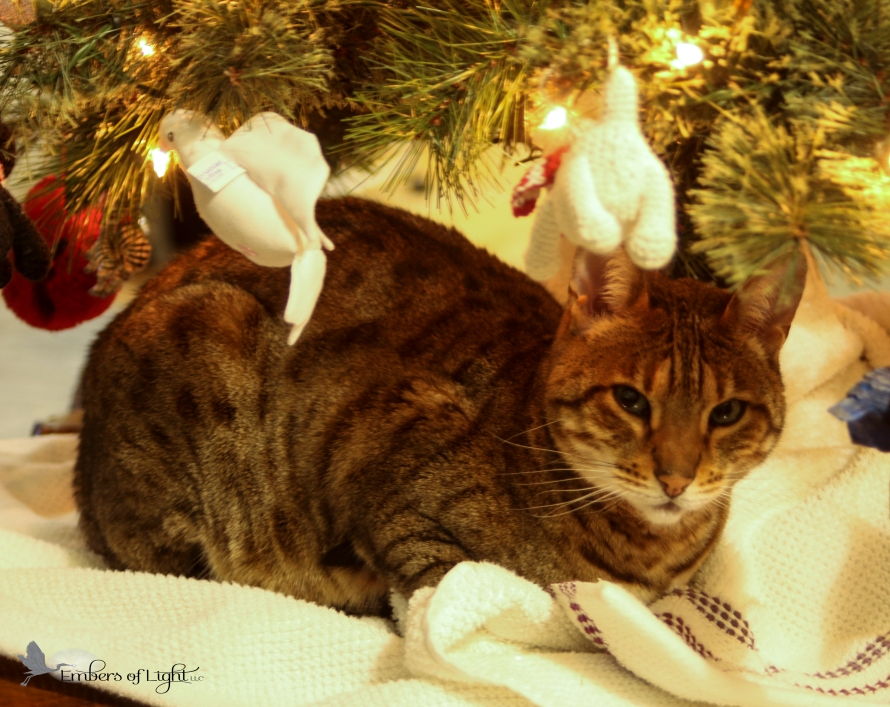 Bengal cat; Christmas tree