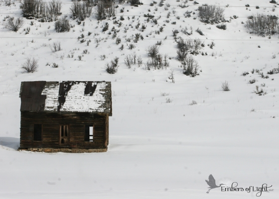abandoned shack; log cabin