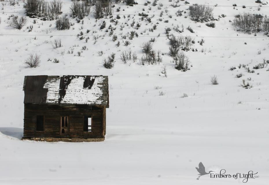 abandoned shack; log cabin