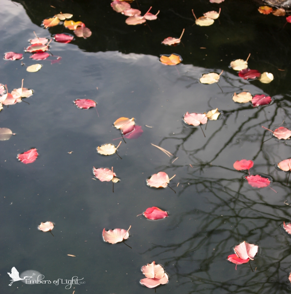 pond, red leaves