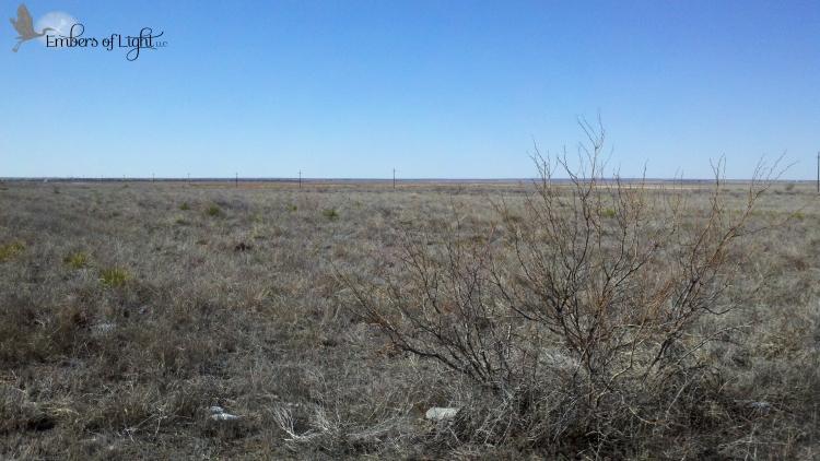 arid, mesquite bush, west Texas, plains,